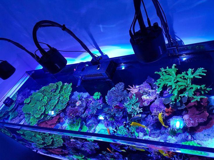 Kessil lampu aquarium 1111