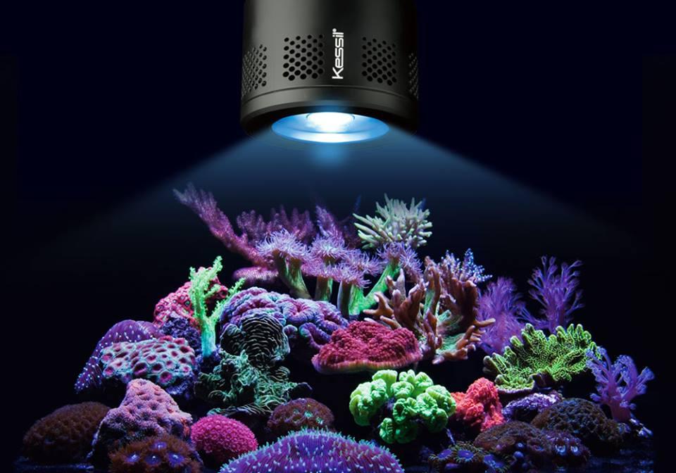 Kessil lampu aquarium 510