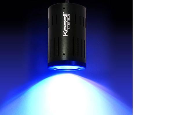 Kessil lampu aquarium 710