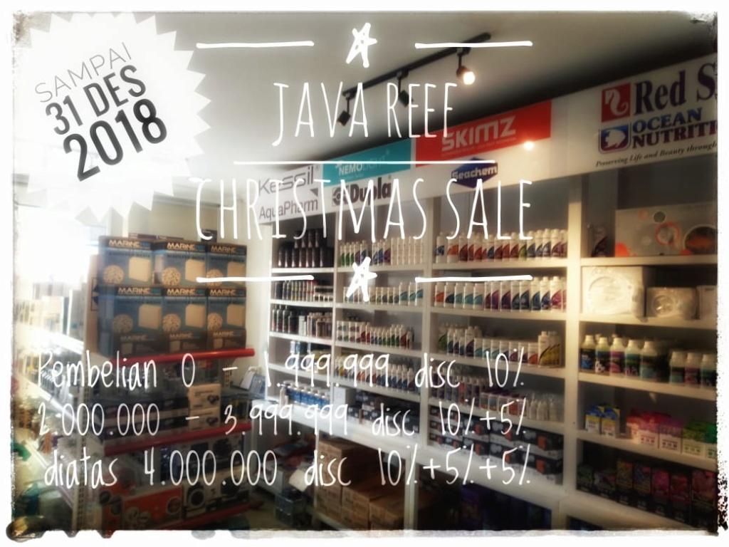 Java Reef studio Christmas Sale Whatsa11