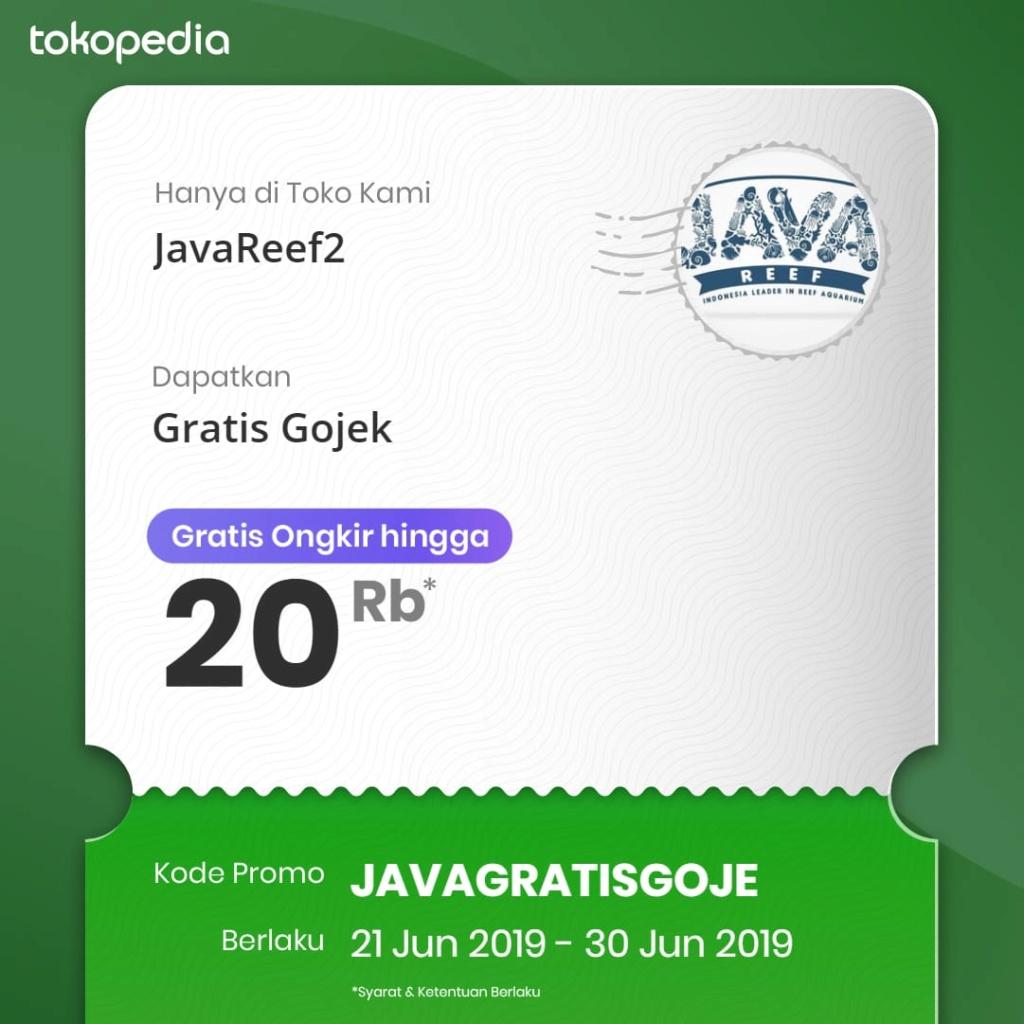 JAVA REEF FREE ONGKIR / POTONGAN SAMPAI  20K  Whatsa38