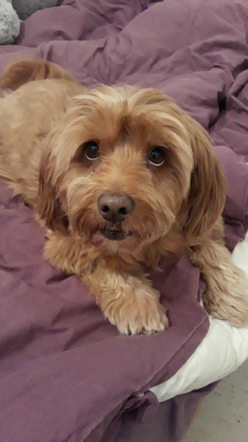 mon chien  Snapch10