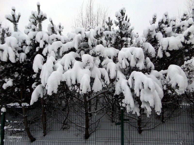 SNOW PICTURES........SHOW US YOUR VITARA! 210