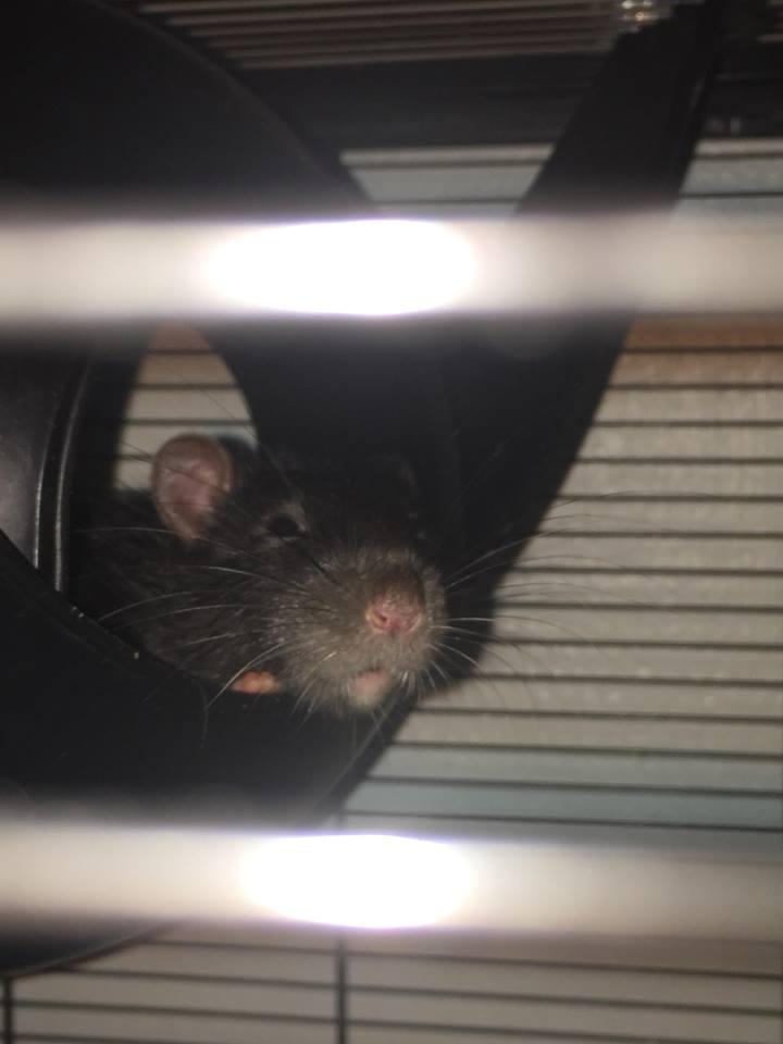 Les Rats Sorciers 41237110