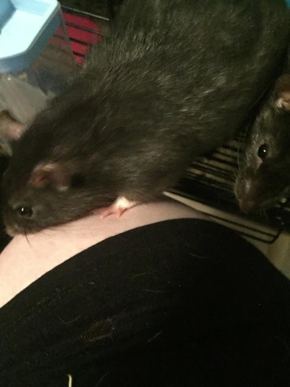 Les Rats Sorciers Img_9813