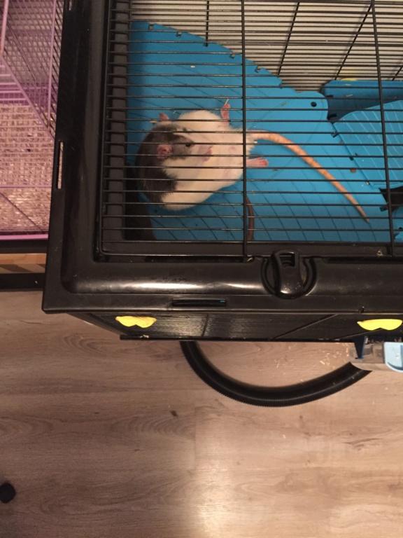 Les Rats Sorciers Img_9814