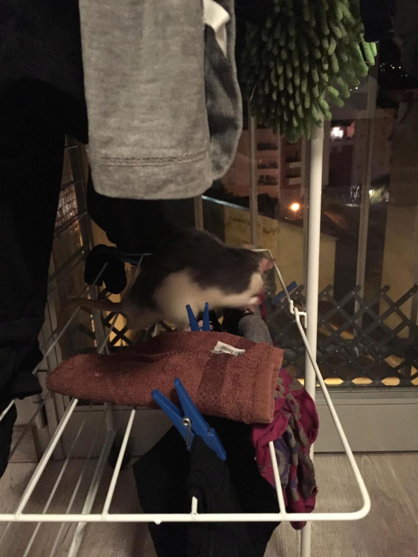 Les Rats Sorciers Skype_10