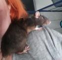 Les Rats Sorciers et Sylvana  20200910