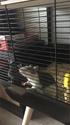Les Rats Sorciers F213a710