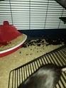 Les Rats Sorciers et Sylvana  Img_2012