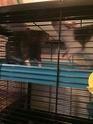 Les Rats Sorciers Img_9811