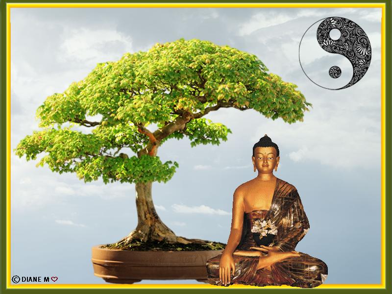 Défi Zen/bouddha,bonsai Dzofi_11