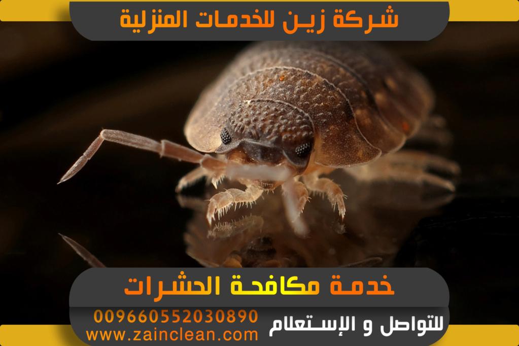 شركة مكافحة حشرات بالرياض Aaayoy10