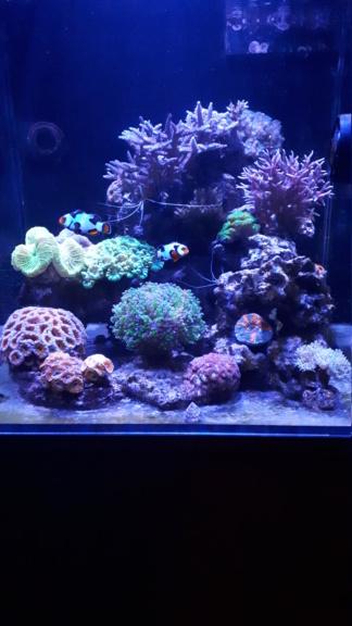 Aquarium débutant ! 20191212