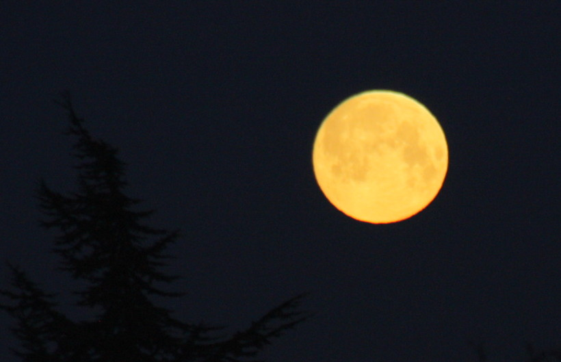 The Moon/La Lune. - Page 9 Img_4011