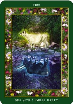 Daily Card Wisdom - February  23853410