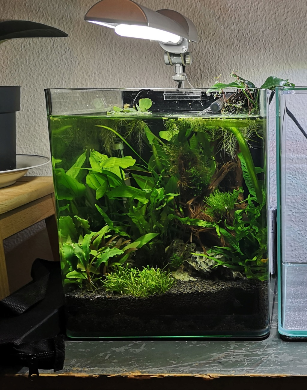 Nano 20 litres : questions et aide  Img_2012