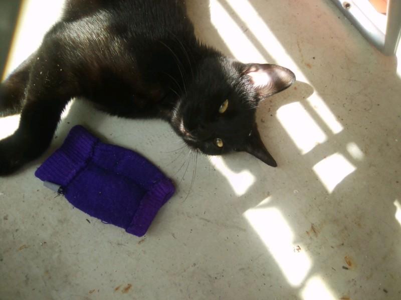 OSTIE, chatonne noire née vers le 08/10/18 20190617