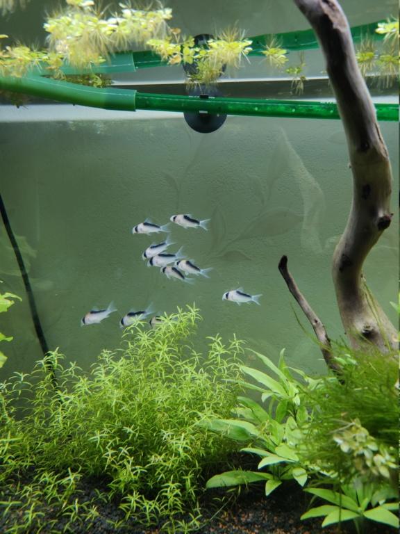 Aquarium 240 litres suivi - Page 6 15806610