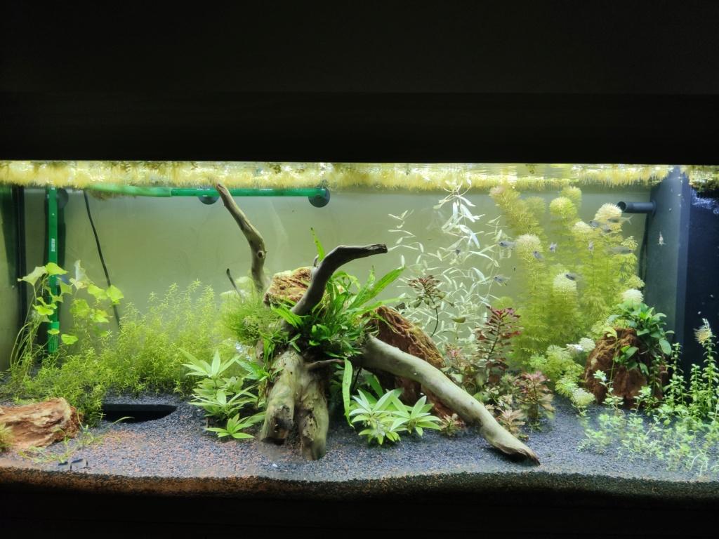 Aquarium 240 litres suivi - Page 9 Img_2011