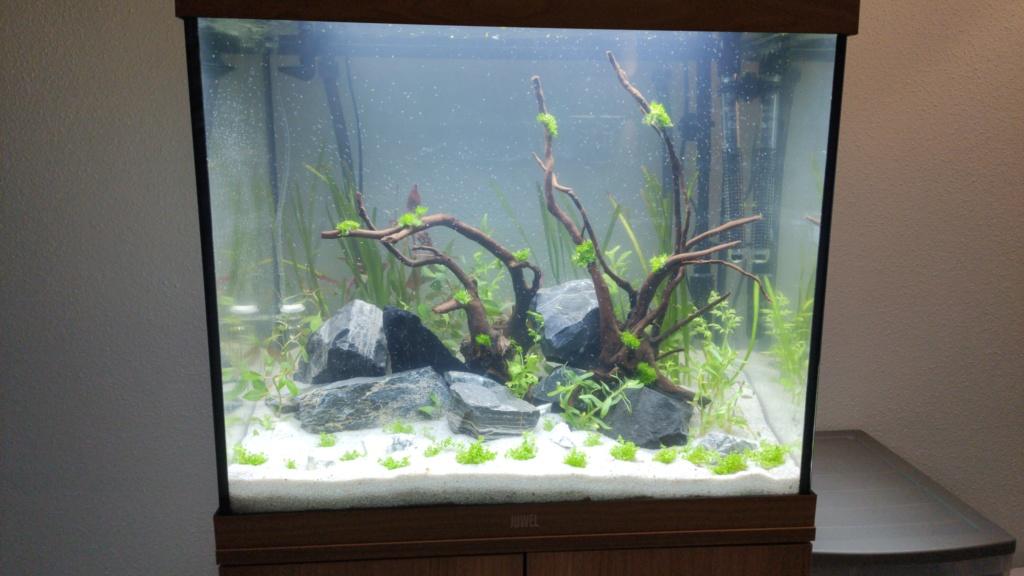 Nouveau membre - nouveau bac - Juwel LIDO  120 LED Img-2011