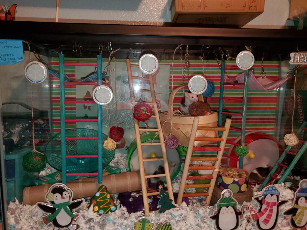 Christmas cage/tank!!! 20201212