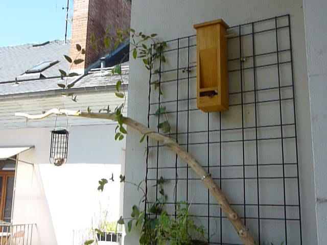 déplacer un nid ou attendre son déménagement P1060011