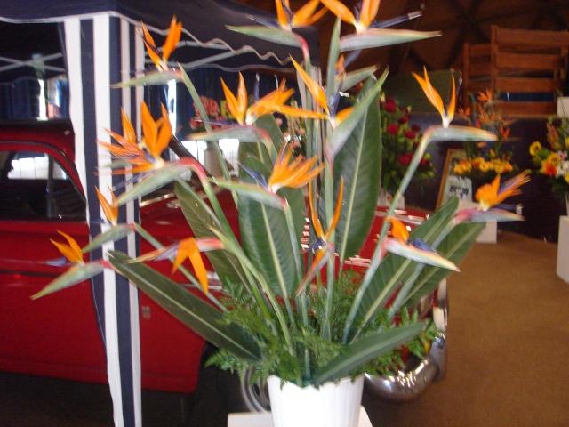 Exposition florale Avril 2007 à Savigny Dsc02111