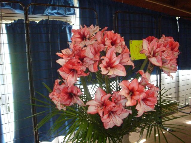 Exposition florale Avril 2007 à Savigny Dsc02116