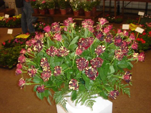 Exposition florale Avril 2007 à Savigny Dsc02126