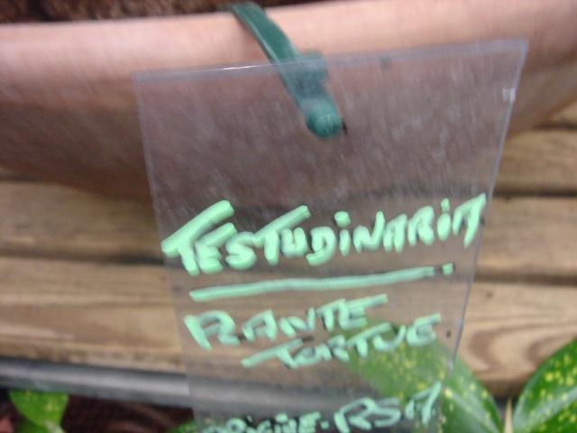 ma plante tortue Dsc03412