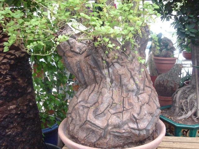 ma plante tortue Dsc03413