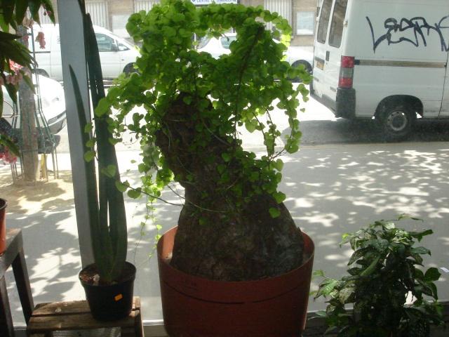 ma plante tortue Dsc03414
