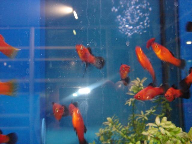 Mon aquarium en cours de création. Dsc03426