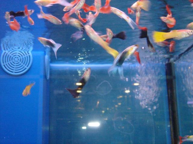 Mon aquarium en cours de création. Dsc03427