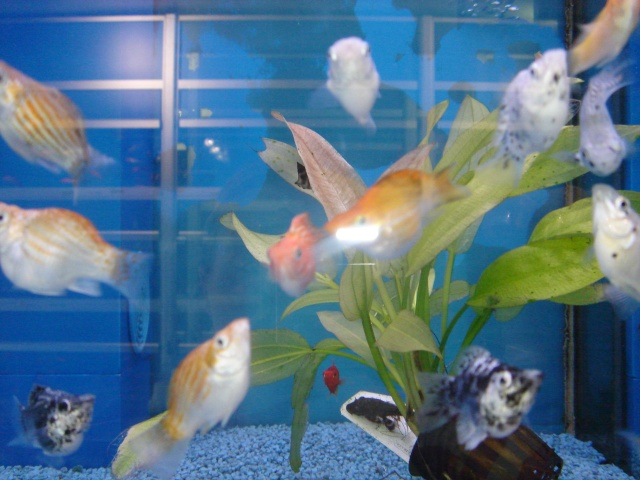 Mon aquarium en cours de création. Dsc03428