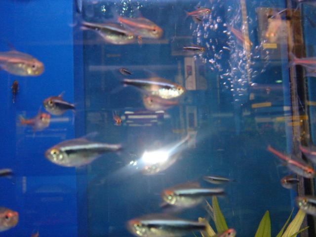 Mon aquarium en cours de création. Dsc03429