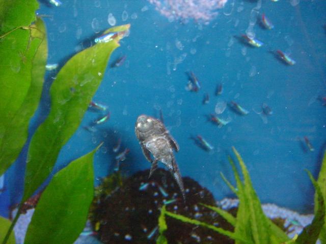 Mon aquarium en cours de création. Dsc03431