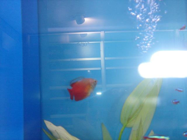 Mon aquarium en cours de création. Dsc03432