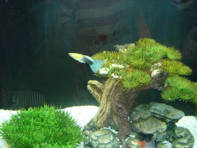 Mon aquarium en cours de création. Dsc03433