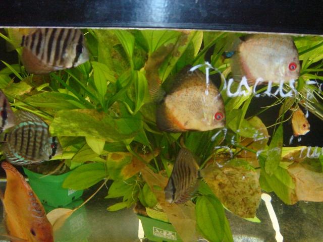 Mon aquarium en cours de création. Dsc03524