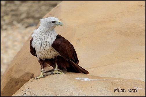 Zoo Parc de Beauval 02_mil10