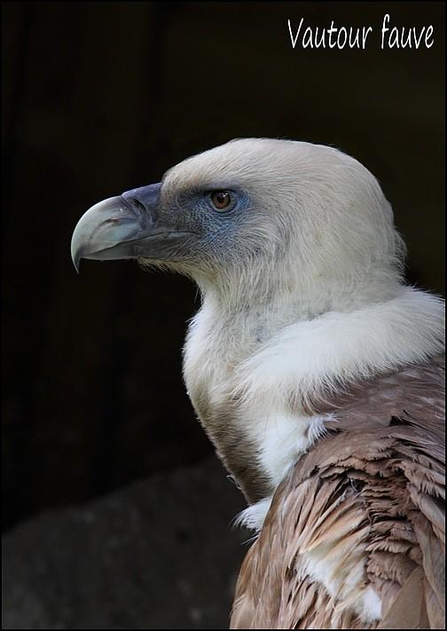 Zoo Parc de Beauval 02_vau10