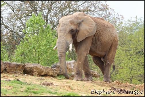 Zoo Parc de Beauval 05_ely10