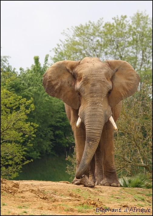 Zoo Parc de Beauval 06_ely10