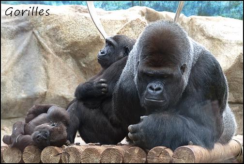 Zoo Parc de Beauval 08_gor10