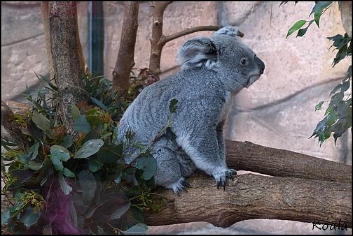 Zoo Parc de Beauval 09_koa10