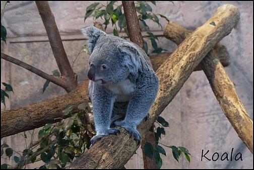 Zoo Parc de Beauval 10_koa10