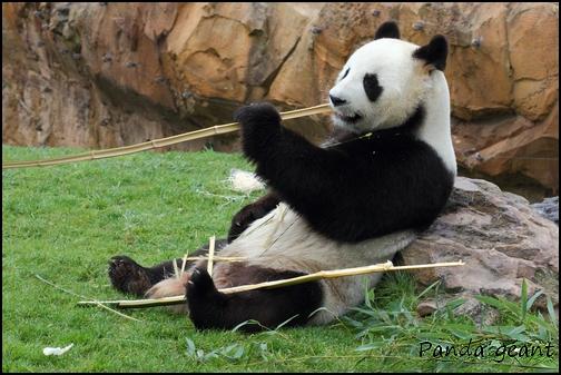 Zoo Parc de Beauval 12_pan10