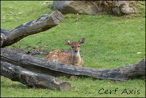 Zoo Parc de Beauval 16_cer10